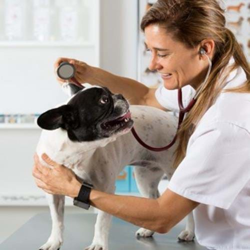 So you Want To Be A Veterinary Nurse?