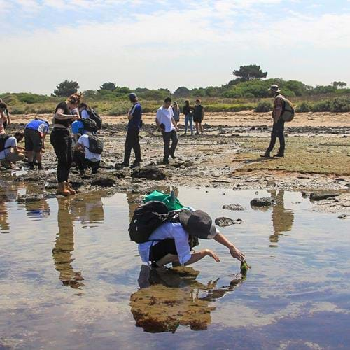 Conservation students working to protect land and sea